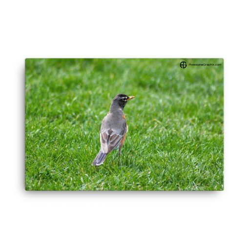 American Robin Bird standing on green grass on a sunny day 24 x 36 Canvas - AwesomeGraphix.com - T-Shirts, Caps, Mugs, Baby Onesies, Wall Art and more!