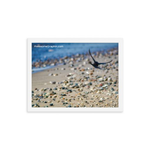 Bird gliding over colourful rocks at the beach - Framed poster (various sizes) - AwesomeGraphix.com - T-Shirts, Caps, Mugs, Baby Onesies, Wall Art and more!