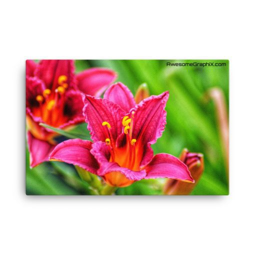 Daylily Ruby Stella – Canvas (24×36) - AwesomeGraphix.com - T-Shirts, Caps, Mugs, Baby Onesies, Wall Art and more!