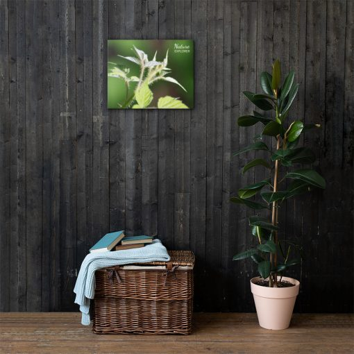 Nature Explorer - Close Up plant Canvas - AwesomeGraphix.com - T-Shirts, Caps, Mugs, Baby Onesies, Wall Art and more!
